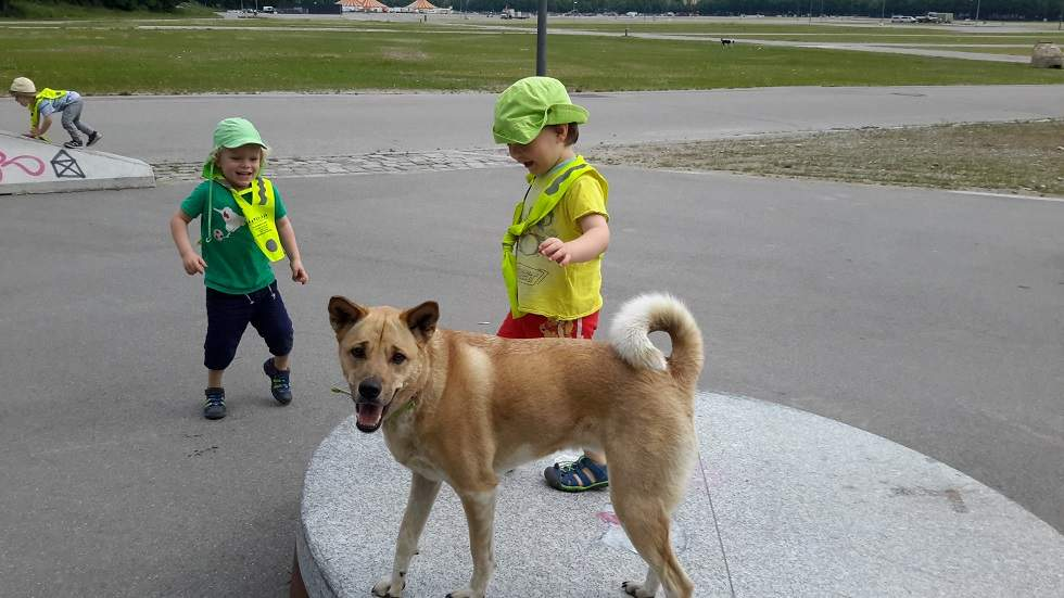 Hund - Tier - Wichtel Akademie München