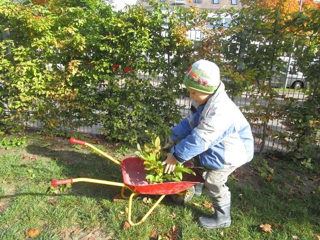 Kita Kind legt Blätter in Schubkarre