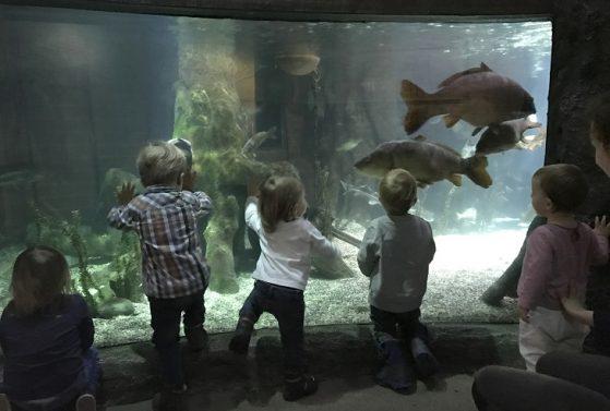 Wichtel-Akademie-Kinder-bestaunen-Fische