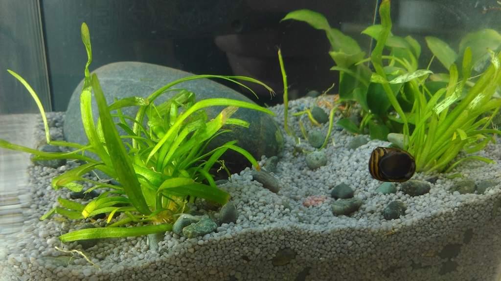 Aquarium - Wichtel Akademie München
