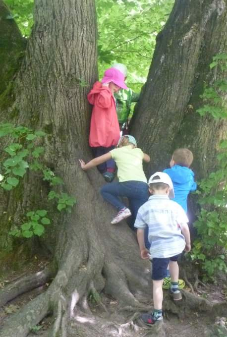 Kindergarten-Biederstei-Schwabing-Baum-Klettern- Wichtel Akademie München