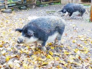 Wildschwein - Natur - Wichtel Akademie München
