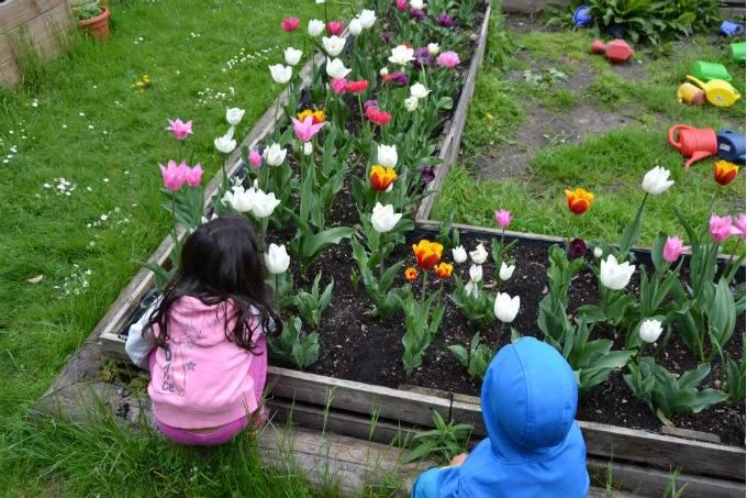 Tulpen - Garching - Wichtel Akademie München