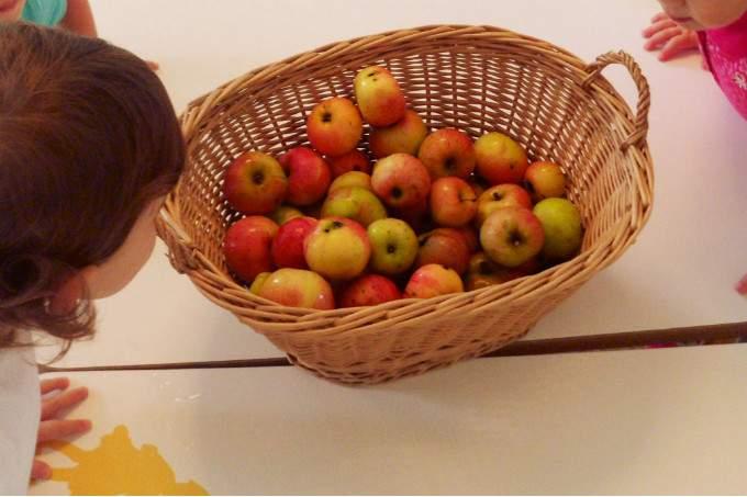 Äpfel - Korb - Wichtel Akademie München